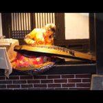 朝鲜世界21集: 在开城体验打糕, 一旁的美女用伽倻琴弹出《我只在乎你》【12季:朝鲜世界】 / 旅行纪录片我去看世界