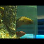 【朝鲜世界2】18集:参观夏令营的水族馆,这大概是在朝鲜见过最丑的鱼了 / 旅行纪录片我去看世界