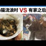 奶猫流浪时VS有家之后 Kitten Before Rescued VS After Rescued / Kevin in Shanghai